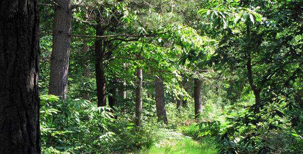 Blean Woods RSPB Nature Reserve