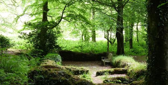 Chapel Wood RSPB Nature Reserve