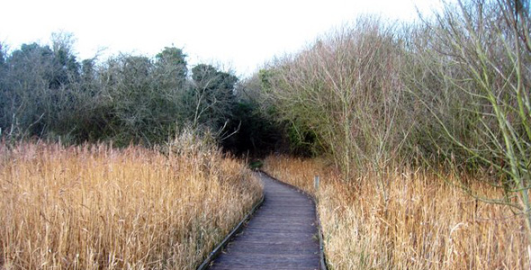 Fowlmere RSPB Nature Reserve