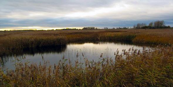 Lakenheath Fen RSPB Nature Reserve