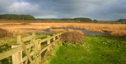 Marazion Marsh RSPB Nature Reserve