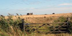 Minsmere RSPB Nature Reserve